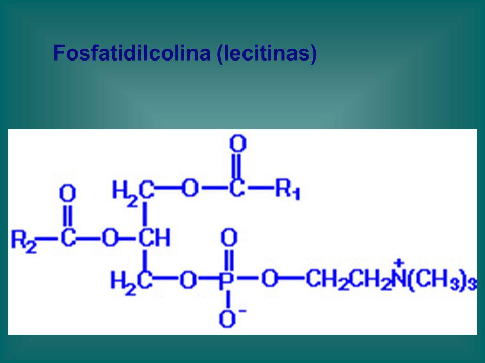 Fosfatidilcolina (lecitinas)