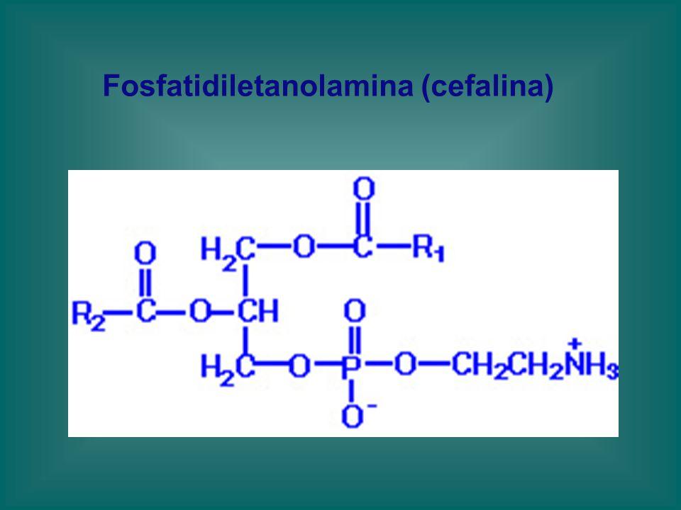 Fosfatidiletanolamina (cefalina)