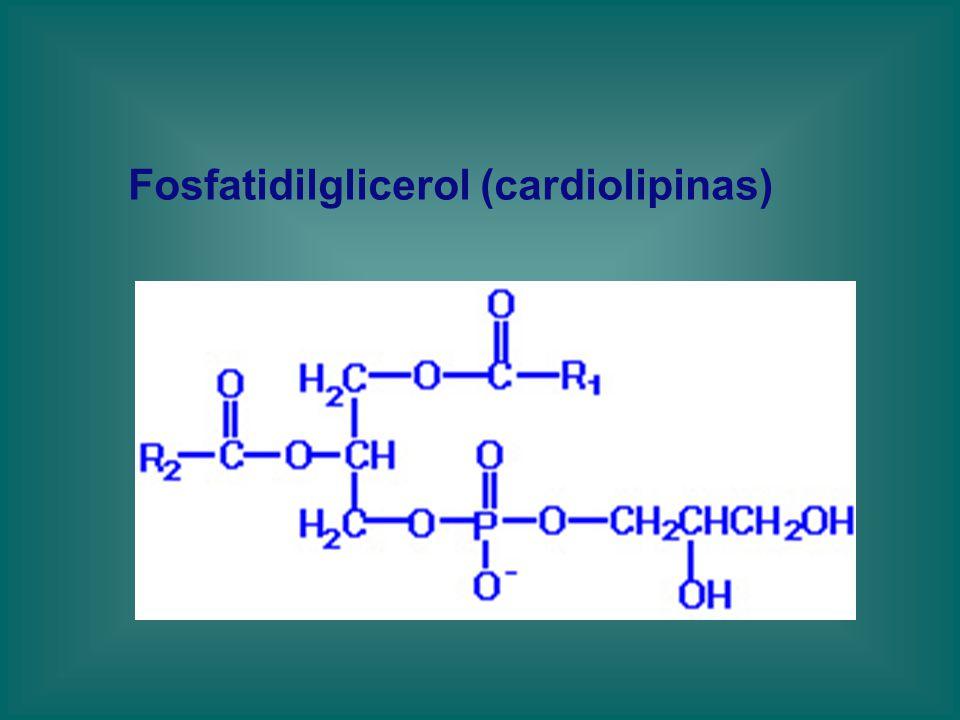 Fosfatidilglicerol (cardiolipinas)