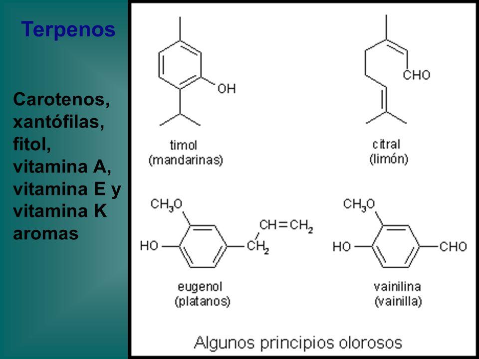 Terpenos Carotenos, xantófilas, fitol, vitamina A, vitamina E y