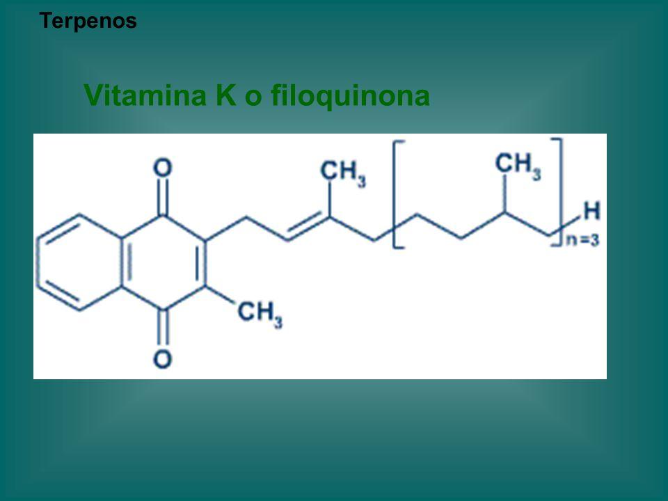Vitamina K o filoquinona