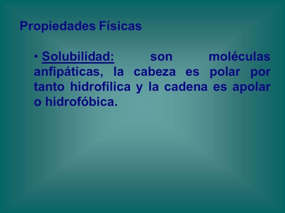 Propiedades Físicas Solubilidad: son moléculas anfipáticas, la cabeza es polar por tanto hidrofílica y la cadena es apolar o hidrofóbica.