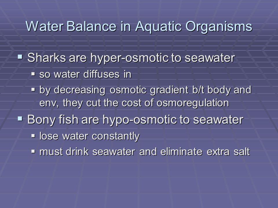 Do Marine Mammals Drink Salt Water