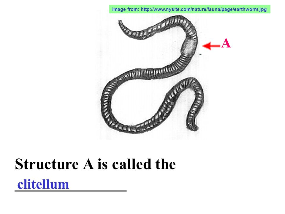 Structure A is called the ______________