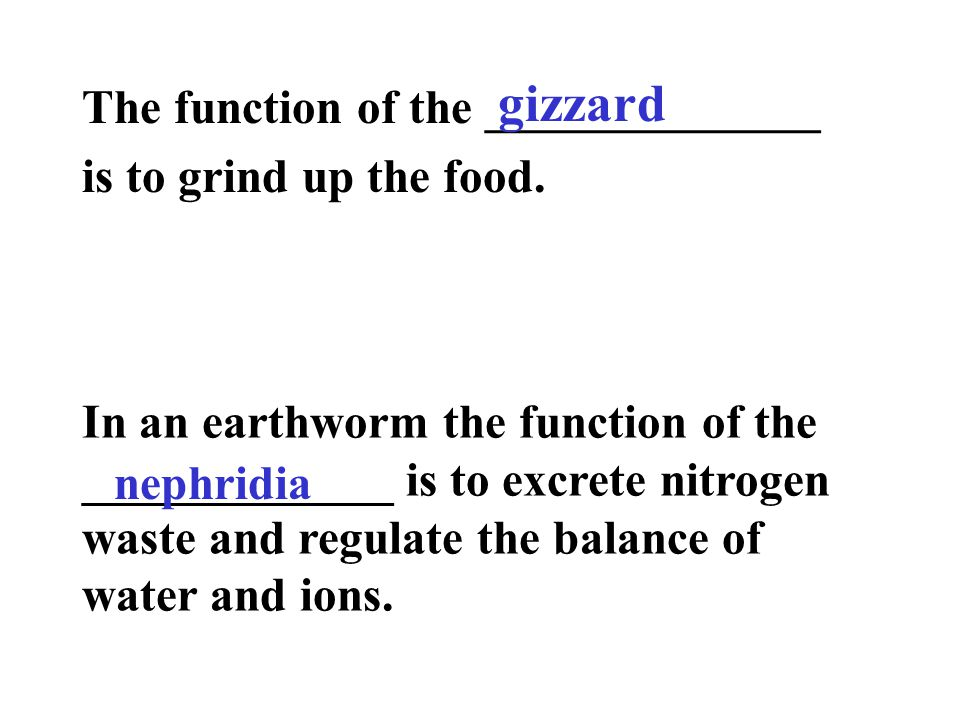 gizzard The function of the ______________ is to grind up the food.
