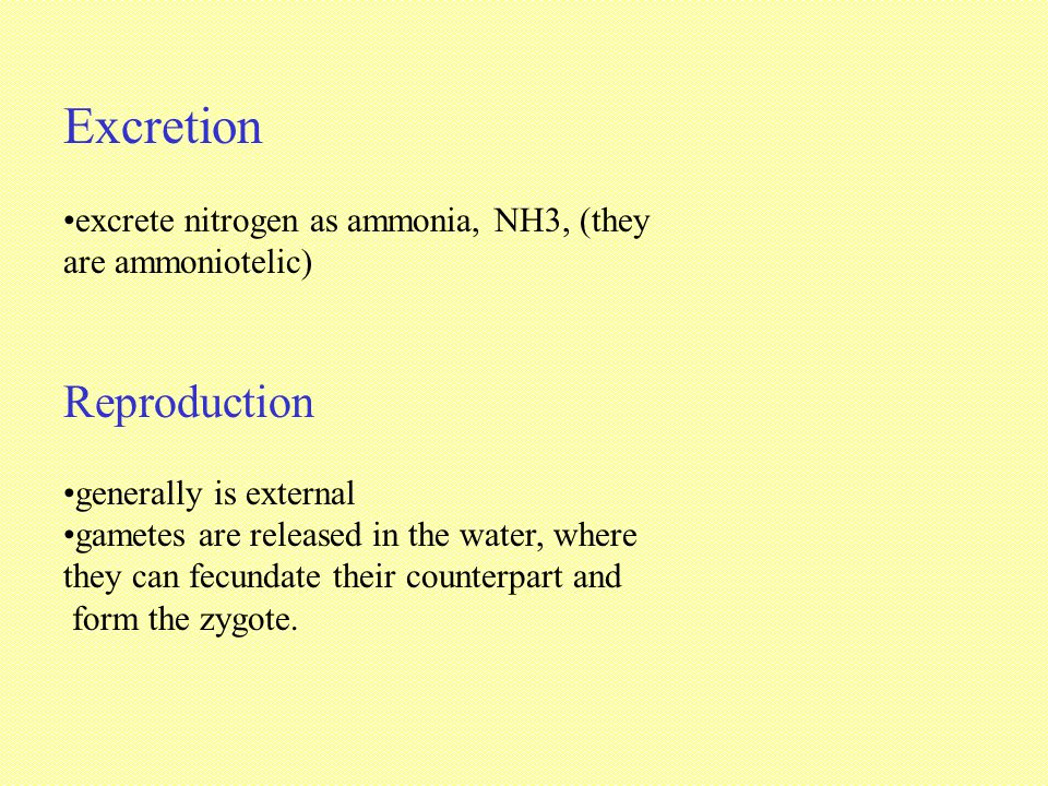 Excretion Reproduction