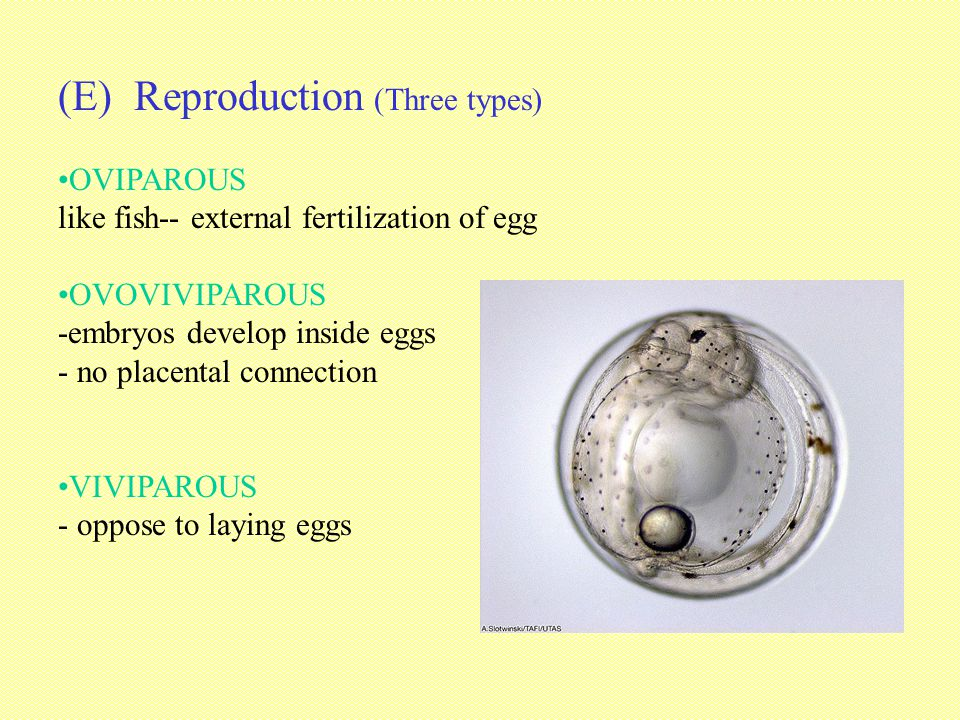 (E) Reproduction (Three types)