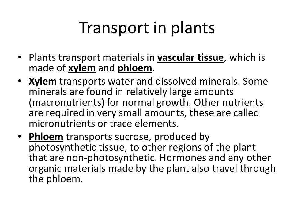 the transpiration process of materials in the xylem and phloem #59 transport in plants - functions of xylem and phloem  materials) provide anchorage  water moves by the pull from the leaves caused by the transpiration xylem vessels are very thin, so they act like a capillary tube helping to withdraw water upward 1 a) labell all parts of the root hair cell (5 mark).