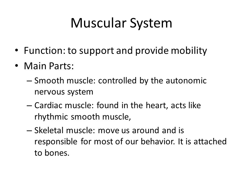Muscular System Functions Powerpoint
