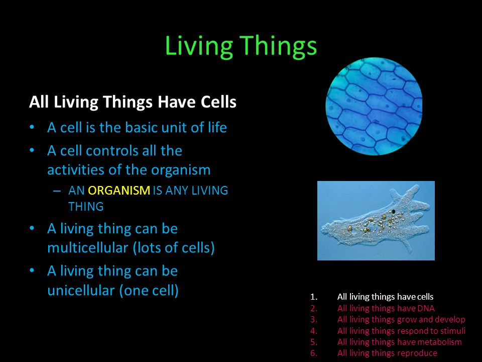 Unicellular Cells Examples