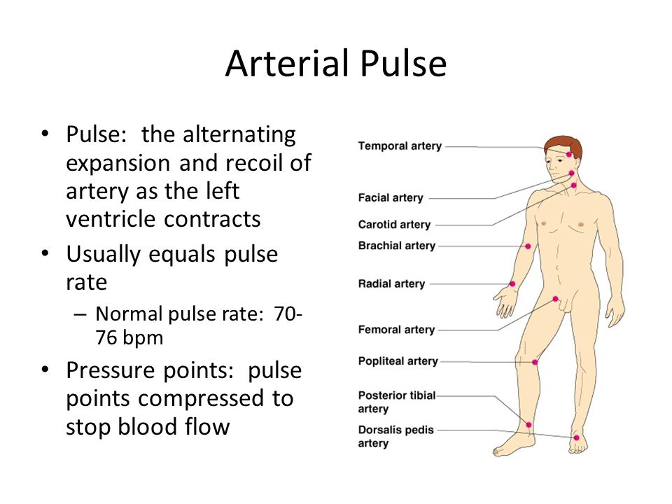 Arterial Pulse Pulse: the alternating expansion and recoil of artery as the left ventricle contracts.