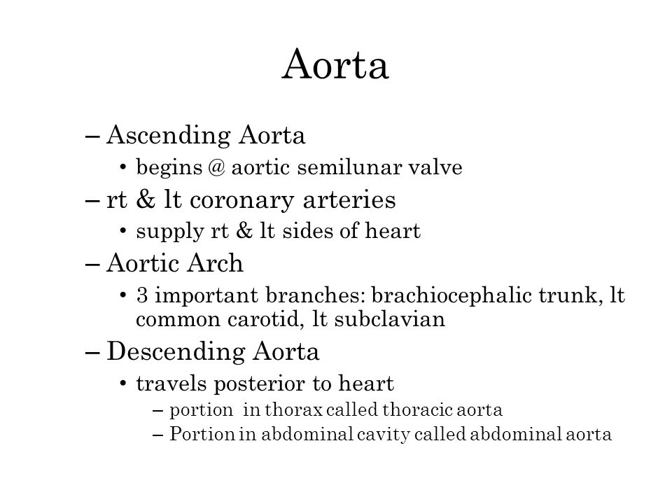 Aorta Ascending Aorta rt & lt coronary arteries Aortic Arch