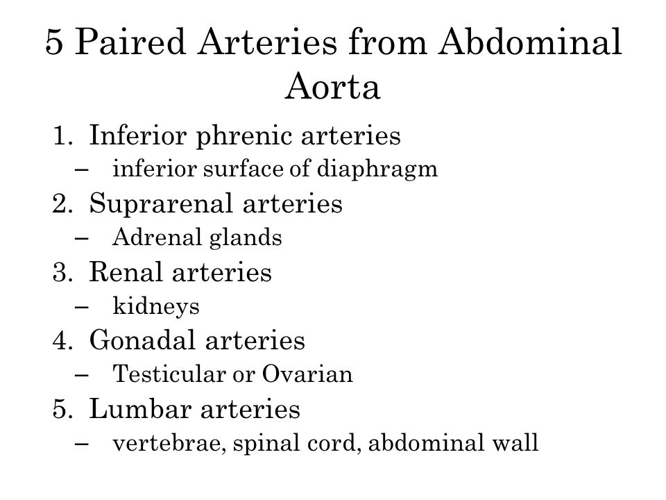 5 Paired Arteries from Abdominal Aorta