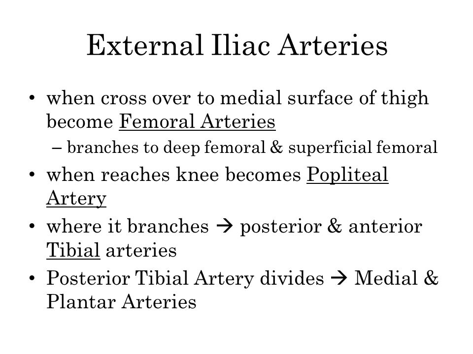 External Iliac Arteries