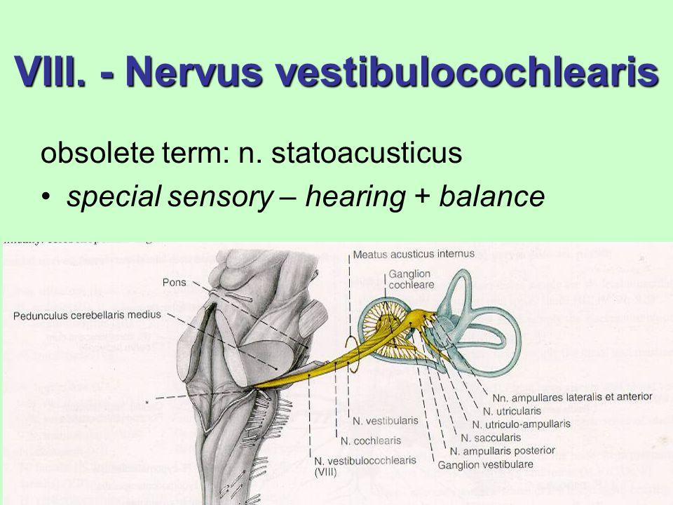 Ausgezeichnet N. Vestibulocochlearis Galerie - Anatomie Von ...
