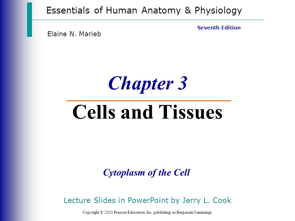 Chapter 3 Cells And Tissues Ppt Video Online Download