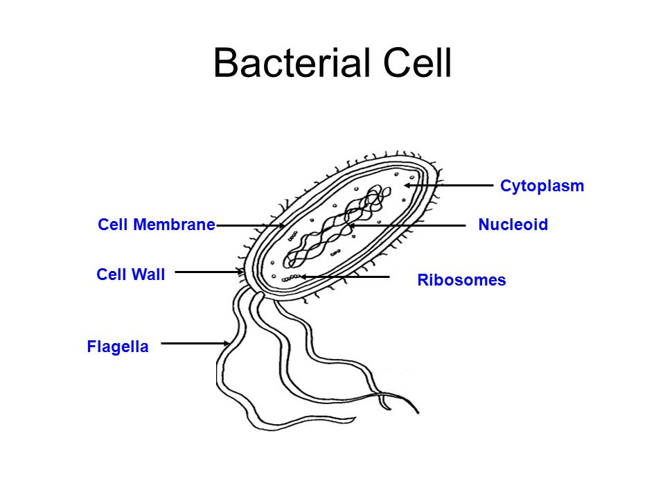 the cell investigation ppt video online download