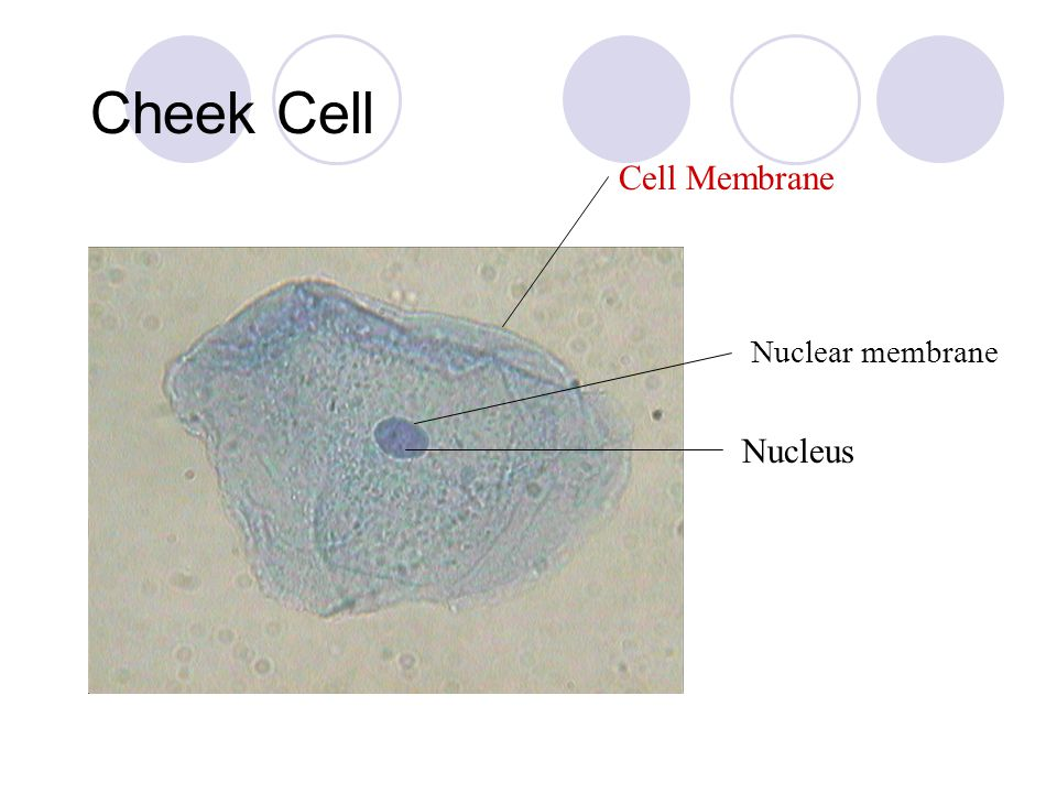 Cell Structure Organelles. - ppt video online download