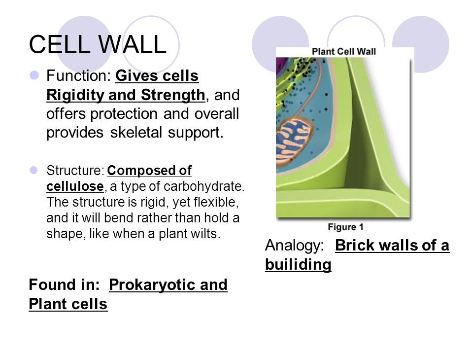 Cell structure organelles ppt video online download 9 cell malvernweather Gallery