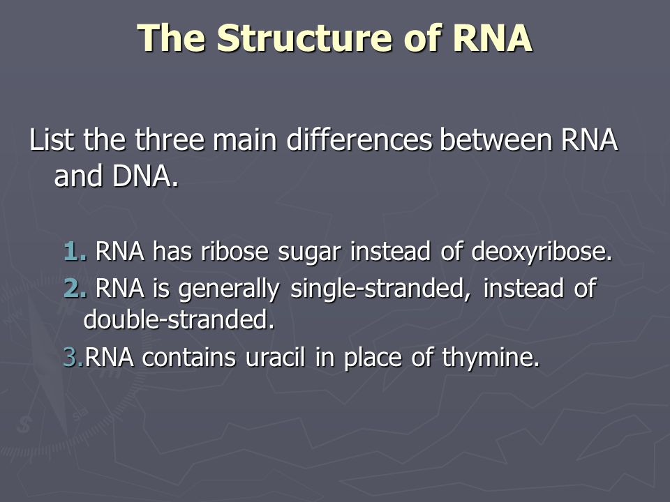 The Structure of RNA List the three main differences between RNA and DNA. RNA has ribose sugar instead of deoxyribose.