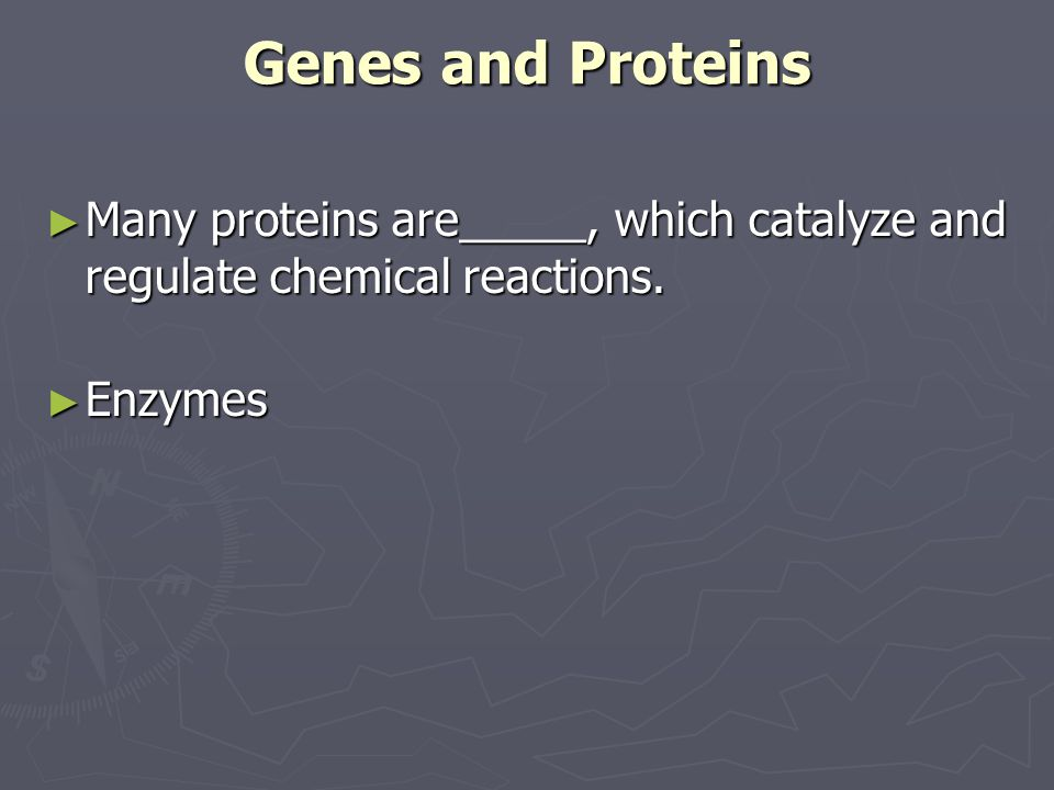 Genes and Proteins Many proteins are_____, which catalyze and regulate chemical reactions. Enzymes