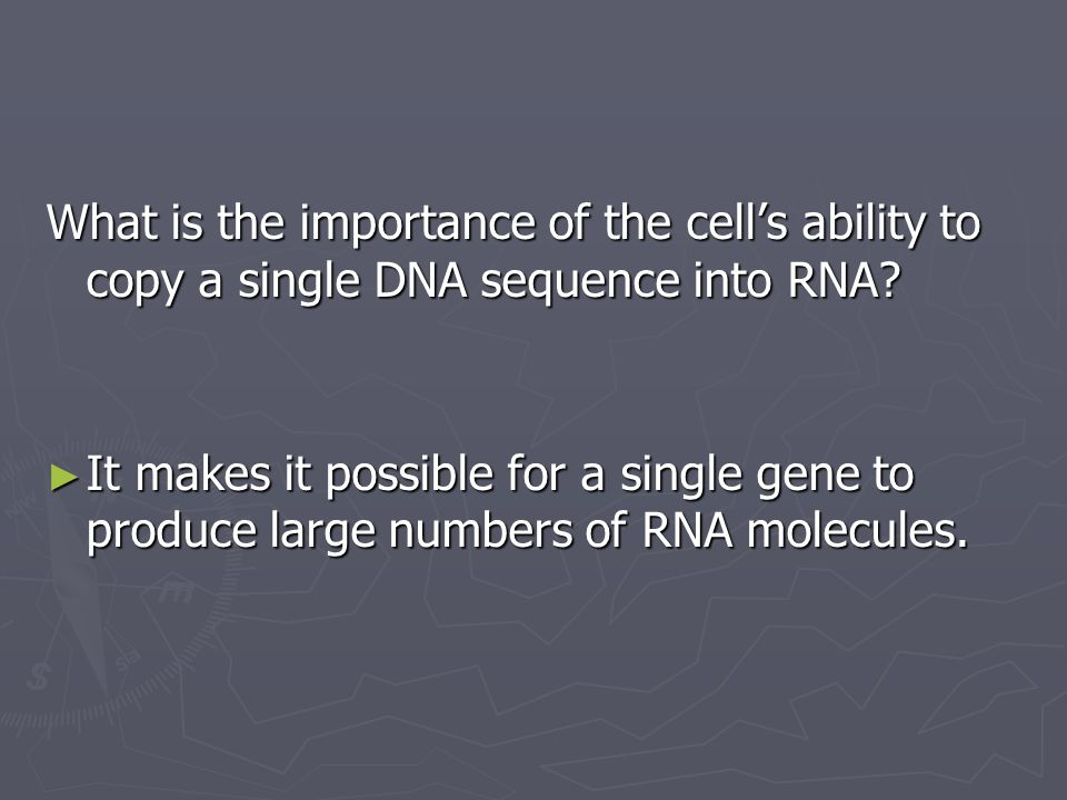 What is the importance of the cell's ability to copy a single DNA sequence into RNA