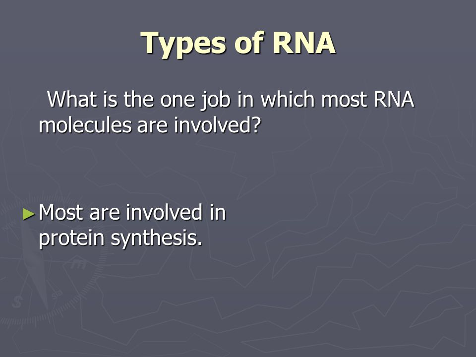 Types of RNA What is the one job in which most RNA molecules are involved.