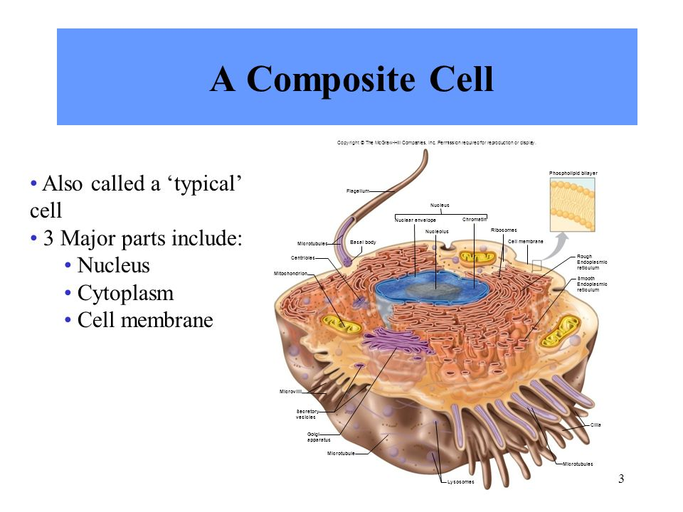 chapter 3 cells copyright  u00a9 the mcgraw