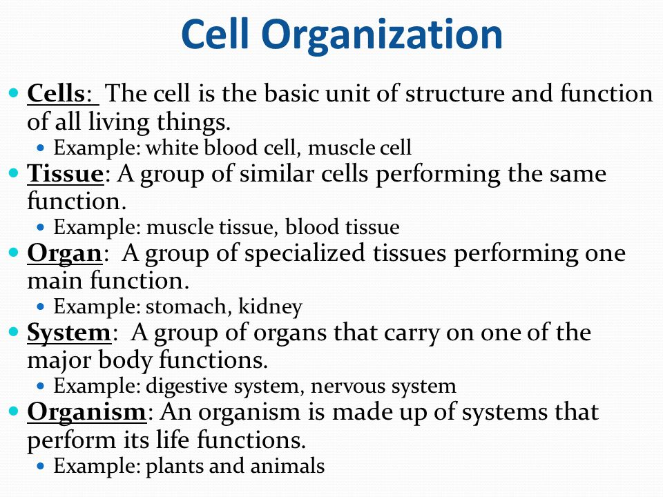 cell structure and organization Characteristics of life nutrition respiration excretion growth movement sensitivity reproduction adaptability 21 • • cell structure & organization cells are the basic unit of life cells can.