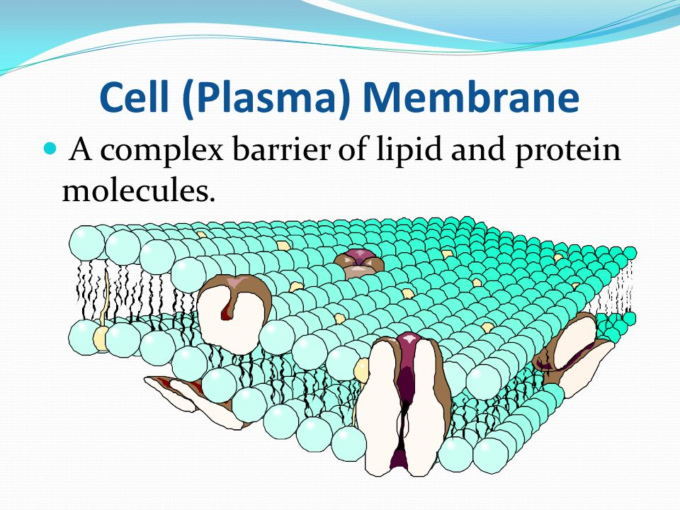 cell membrane beetroot ph Since ethanol has an ability to destroy plasma membrane of beetroot cells, the increase in ethanol concentration will destroy the membranes more severely, which will result in excess diffusion of.