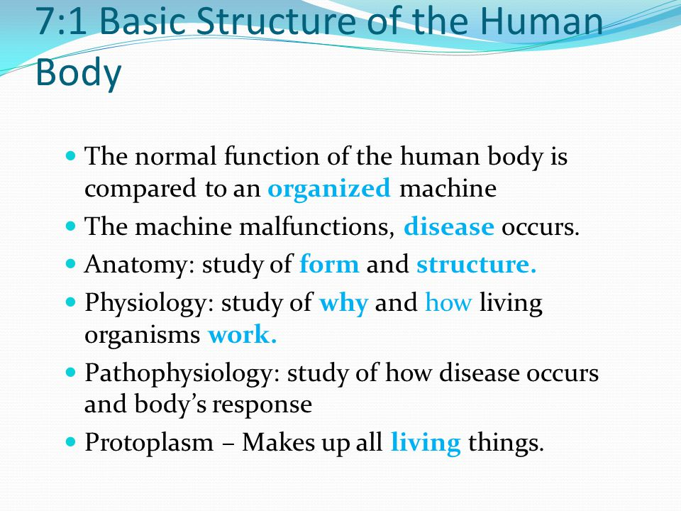 1 the structures of the human Study 21 chapter 7:1 basic structure of the human body flashcards from brenna g on studyblue.