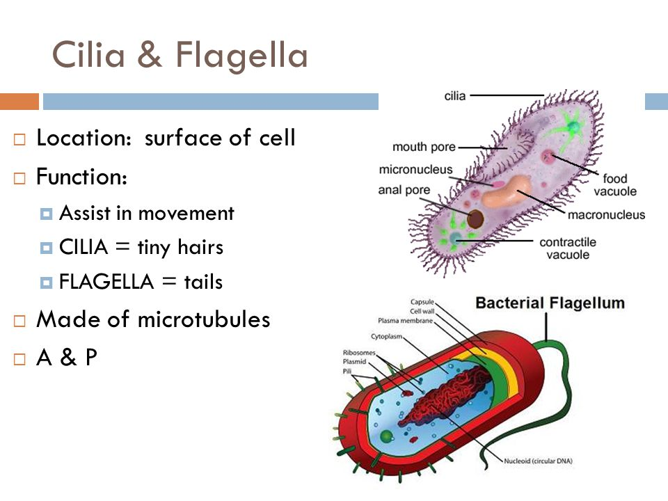 ch 4 cell structure and function ppt video online download