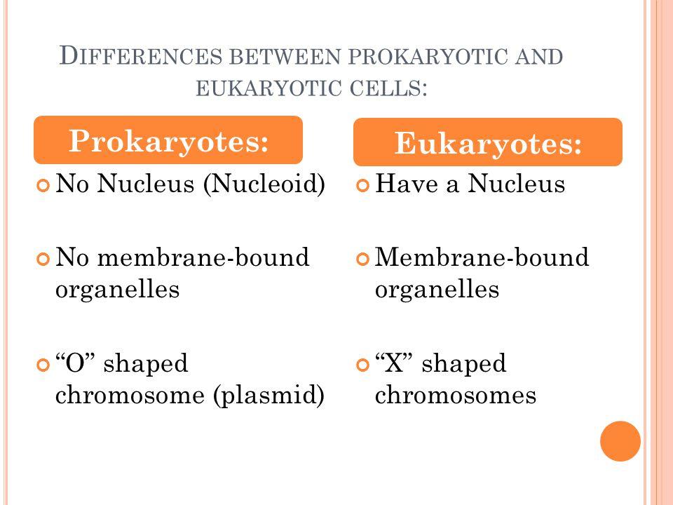 differences between eukaryotic and prokaryotic cells pdf