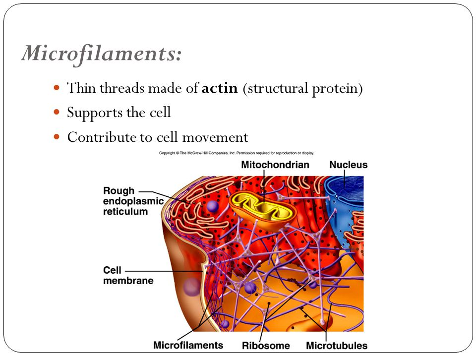 Cells Structure and Function Chapter 7 - ppt video online ...