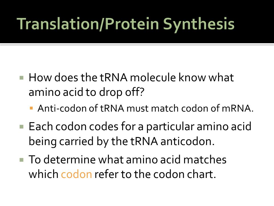Translation/Protein Synthesis