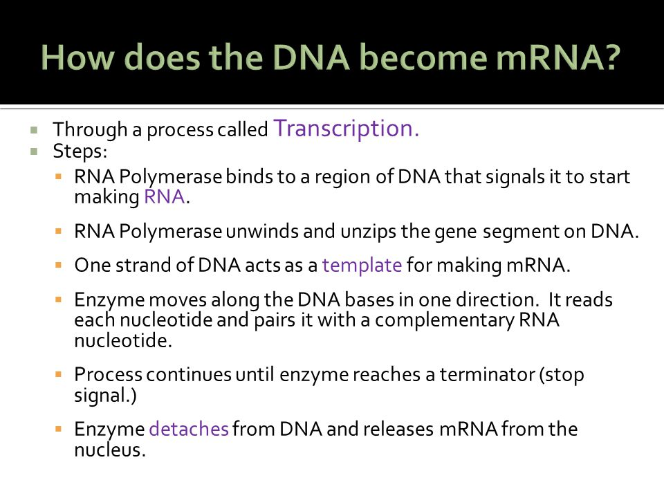 How does the DNA become mRNA