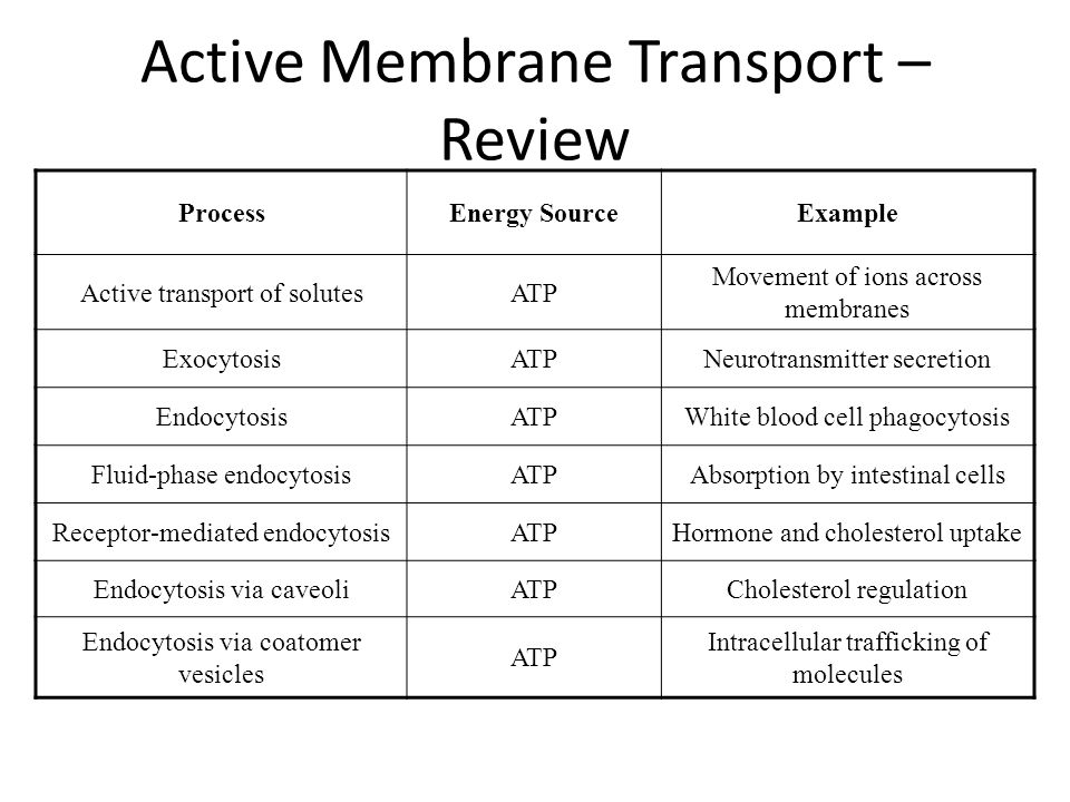 membrane transport process Some examples of active transport are endocytosis, exocytosis and the use of a cell membrane pump diffusion, osmosis and facilitated diffusion are all examples of passive transport in active transport, particles move from areas of low concentration to high concentration, while in passive transport.