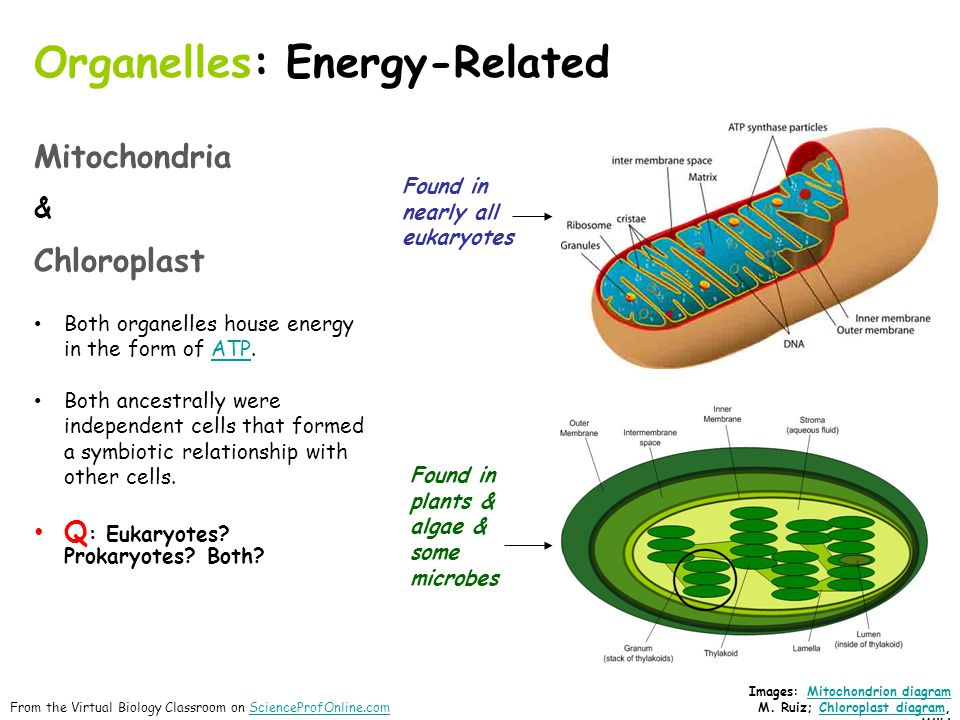 biology organelles How can the answer be improved.