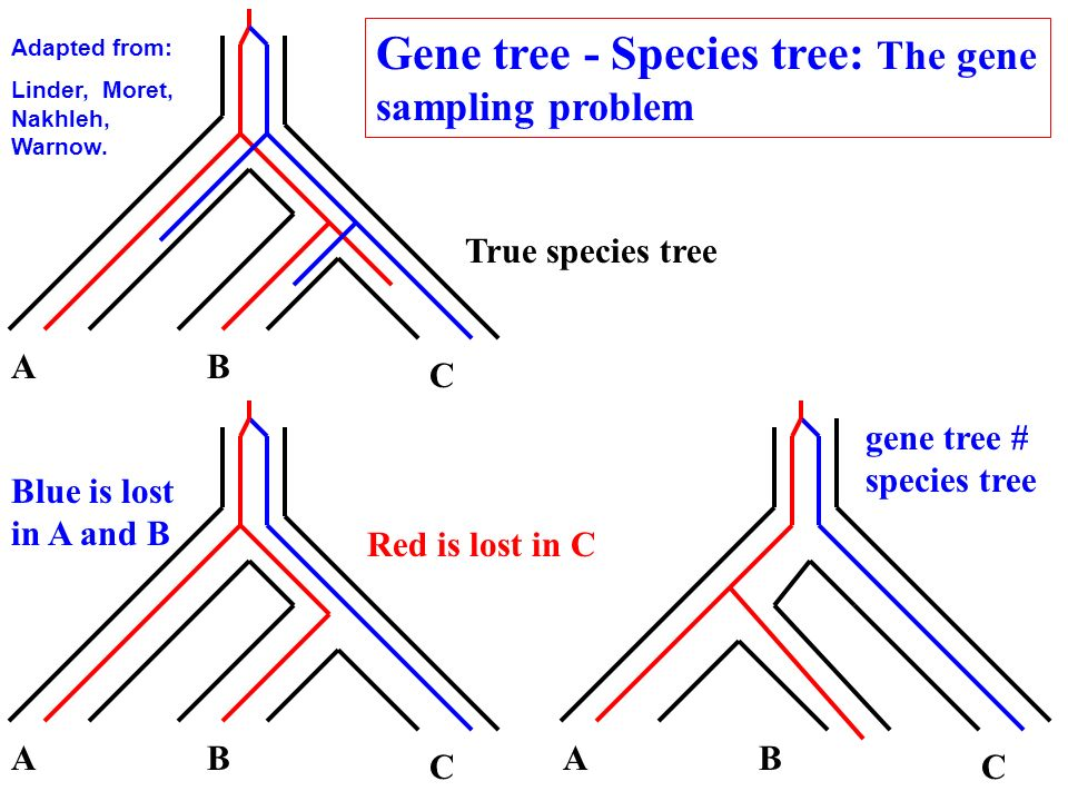 Gene tree - Species tree: The gene sampling problem