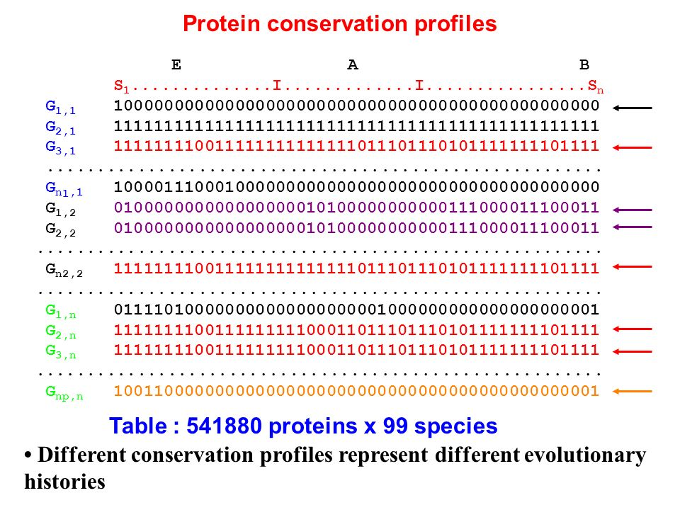 Protein conservation profiles