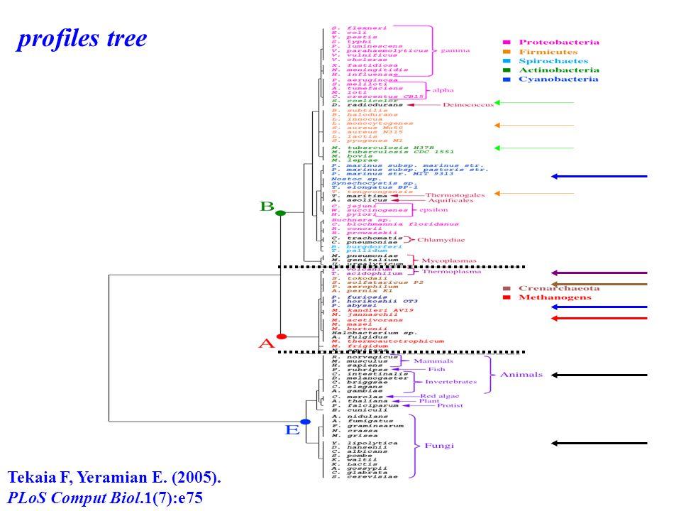 profiles tree Tekaia F, Yeramian E. (2005). PLoS Comput Biol.1(7):e75