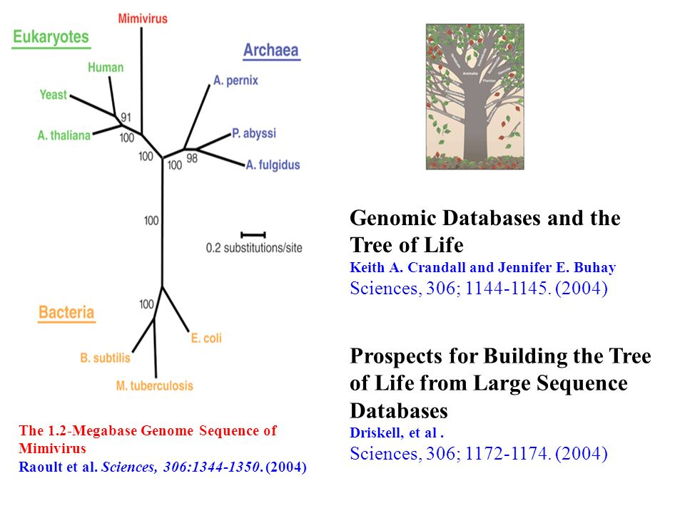 Genomic Databases and the Tree of Life