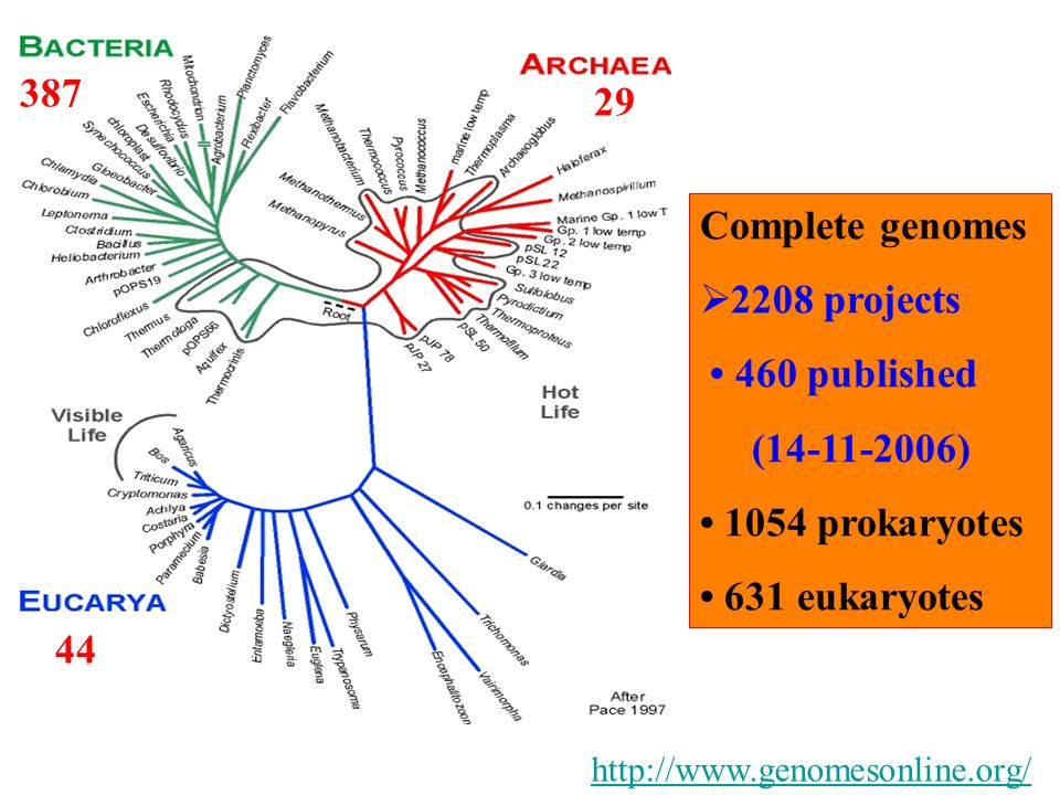 387 29 Complete genomes 2208 projects • 460 published (14-11-2006)
