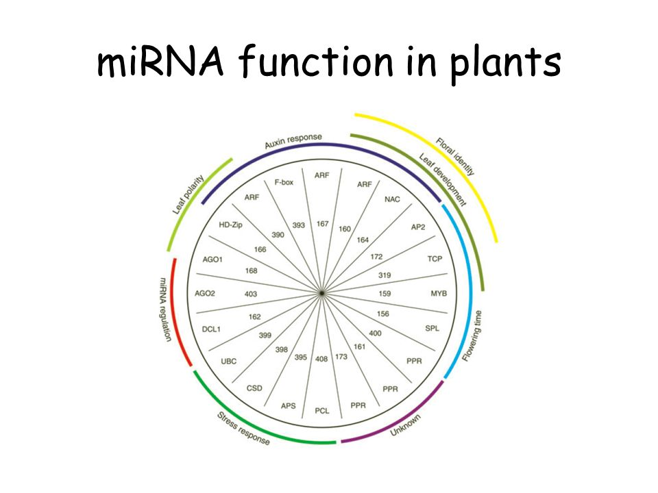 miRNA function in plants