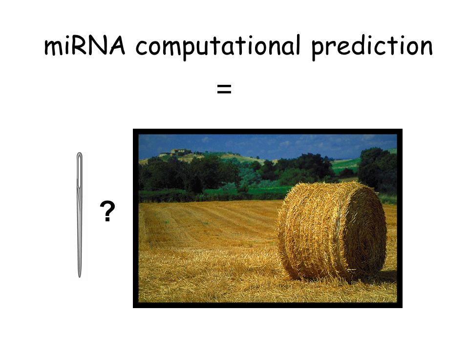 miRNA computational prediction