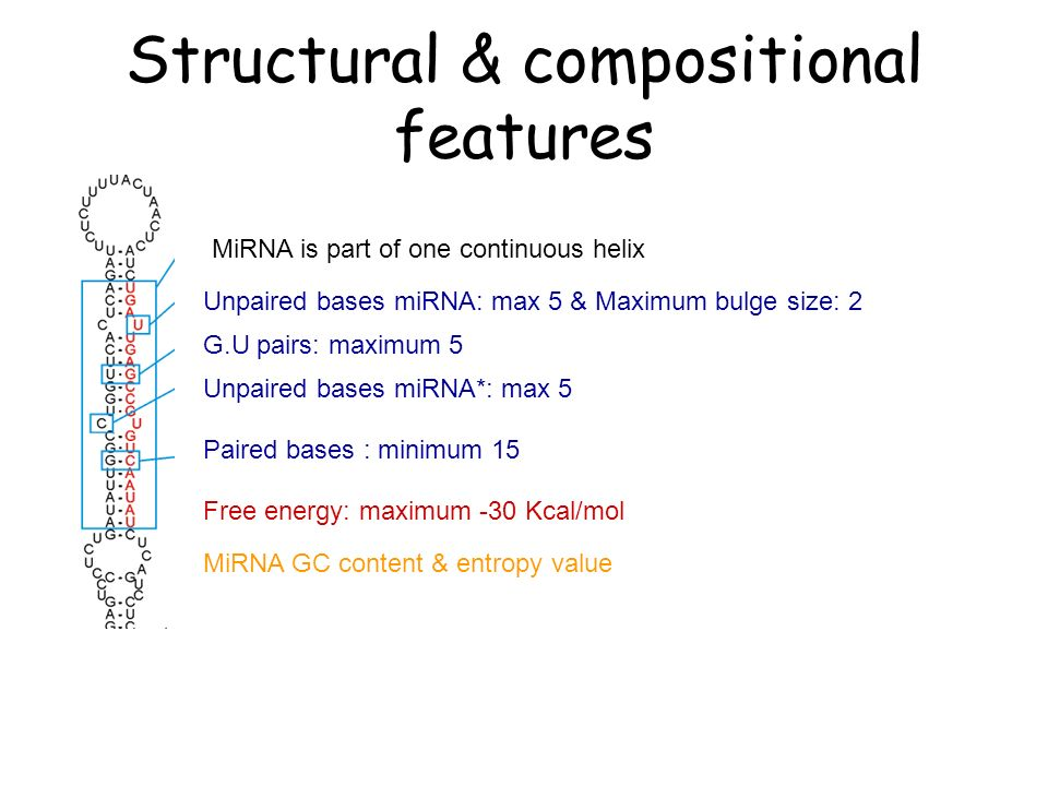 Structural & compositional features