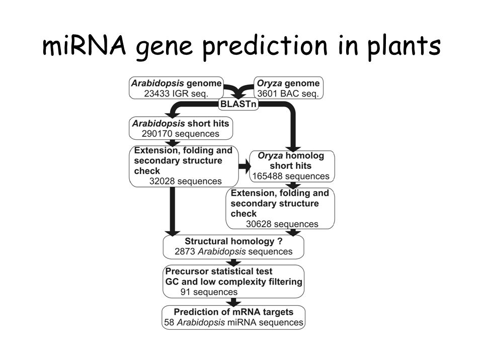 miRNA gene prediction in plants