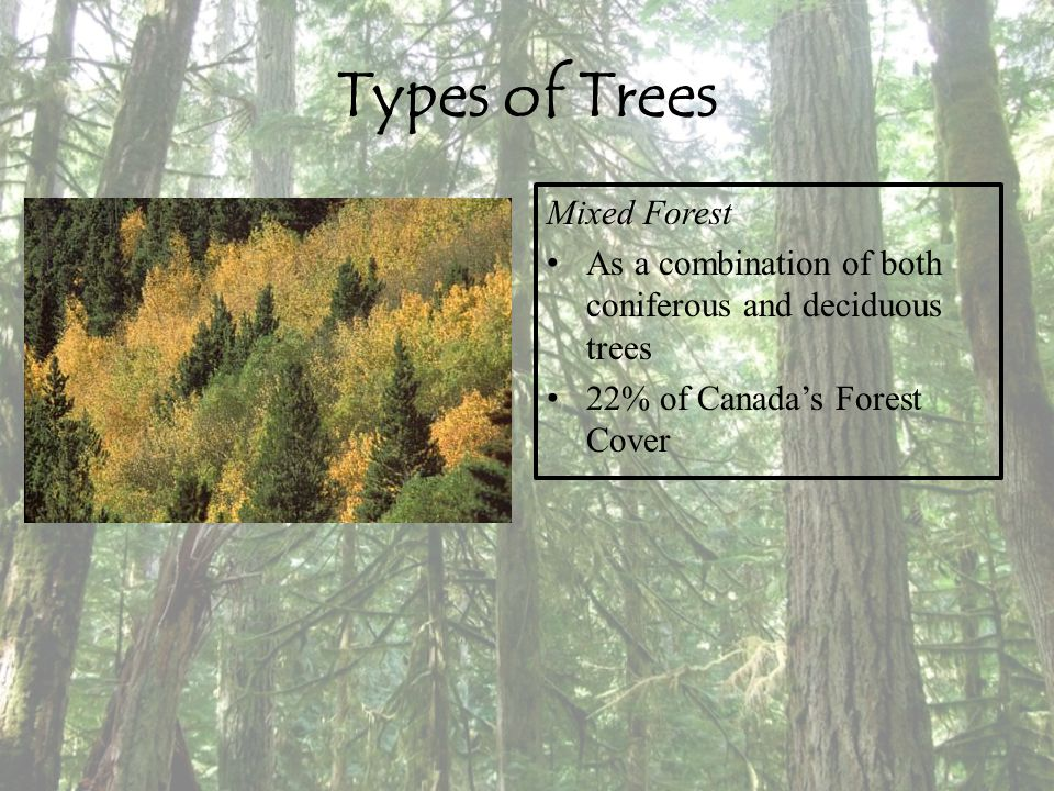 An introduction to the classification of the decideous forest