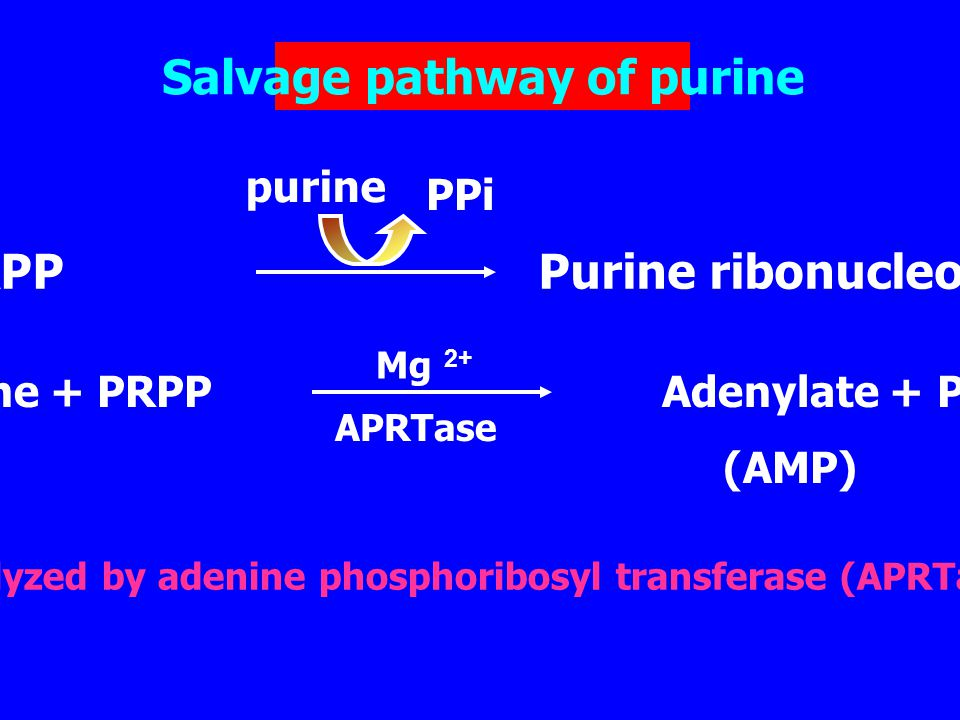 salvage pathway of purine synthesis pdf