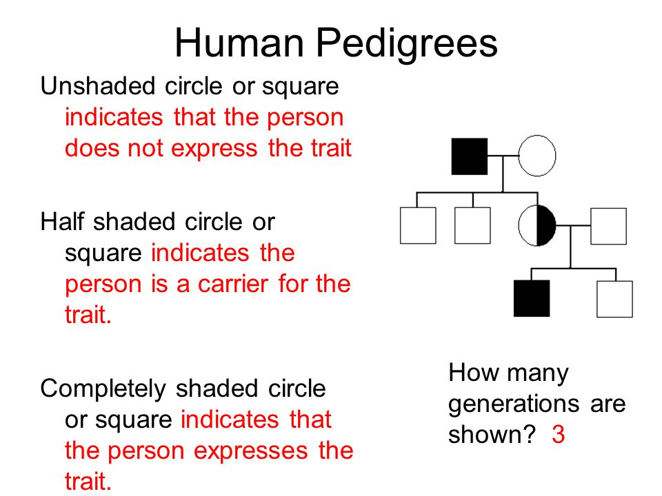 Human Pedigrees Unshaded circle or square indicates that the person does not express the trait.